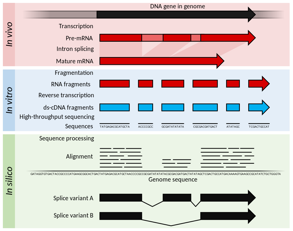 Slides_stat_methods_bioinf/Summary_of_RNA-Seq.png