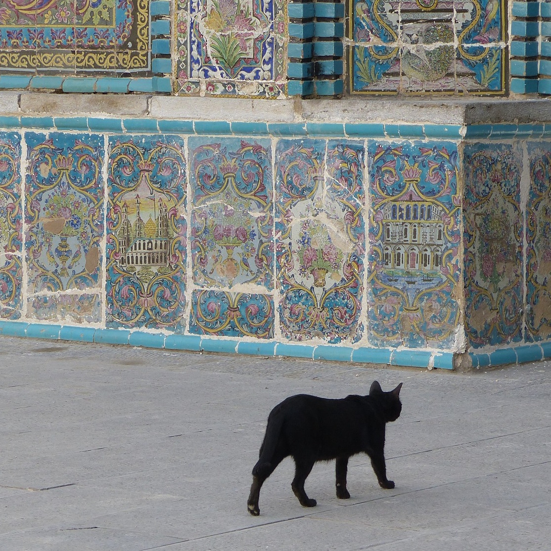 coursera01w02/images/cat_in_iran.jpg