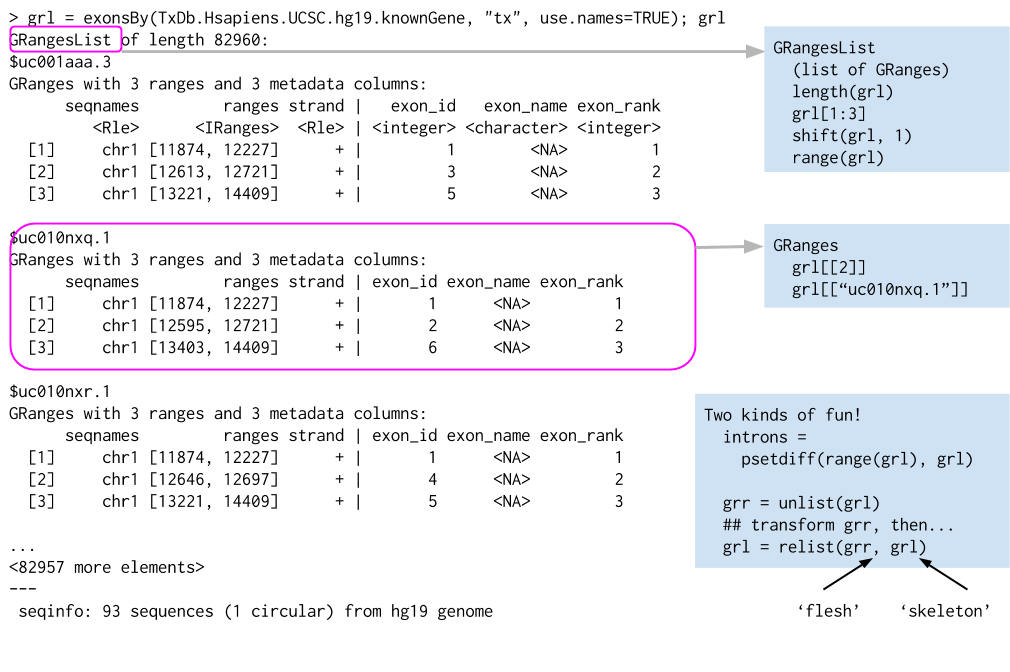 07_introduction_to_bioconductor/our_figures/GRangesList.png
